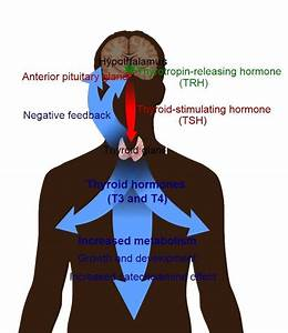 common thyroid problems naperville institute for