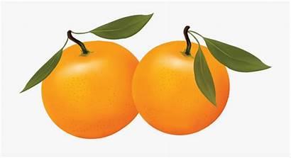Oranges Clipart Orange Clip Transparent Cliparts Clipground