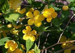 Winterharte Pflanzen Liste : geh lze f r schatten schattenvertr gliche bl tengeh lze ~ Michelbontemps.com Haus und Dekorationen