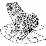 Coloring Frogs Pages Children Justcolor sketch template
