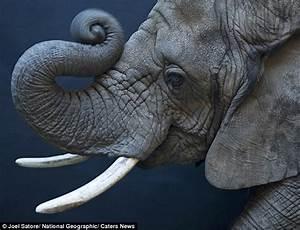 Εκπληκτικές φωτογραφίες άγριων ζώων | Newsbomb