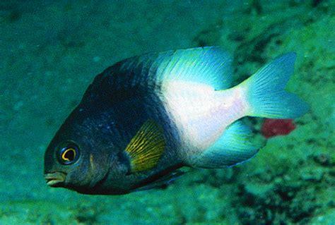 quia fish identification eko