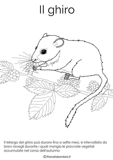 immagini di animali divertenti da colorare disegni di animali che vanno in letargo da colorare