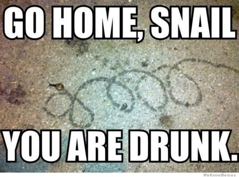 Go Home You Re Drunk Memes - go home snail you are drunk go home you re drunk meme pinterest it memes search and