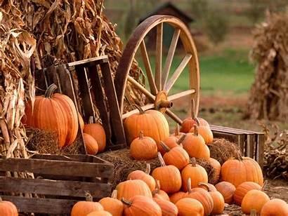 Harvest Fall Wallpapers Pumpkin Backgrounds Autumn Desktop