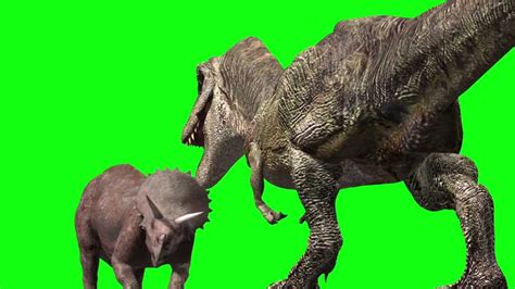 Jurassic Park T Rex Triceratops Fight Animation Royalty