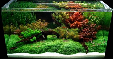 Layout Aquascape by Aquariums Fresh Aquascaping Designs Winter Approaching