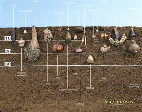 25 great ideas about bulbs on planting bulbs