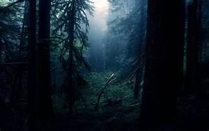Rainforest, Dark