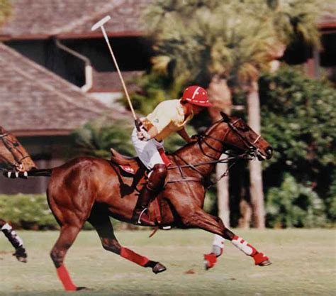 polo ponies centers partner horse halstead brittany