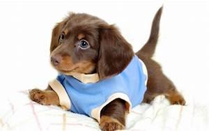 Pin Dressed Up Dog on Pinterest
