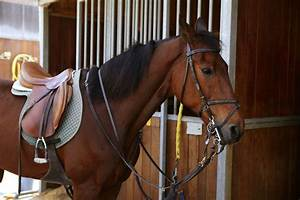 Image Gallery horse tack