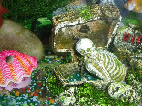 tropical fish tank decorations 1000 images about fish tanks on
