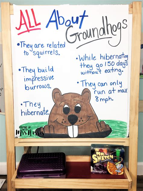 celebrating groundhog day   elementary classroom