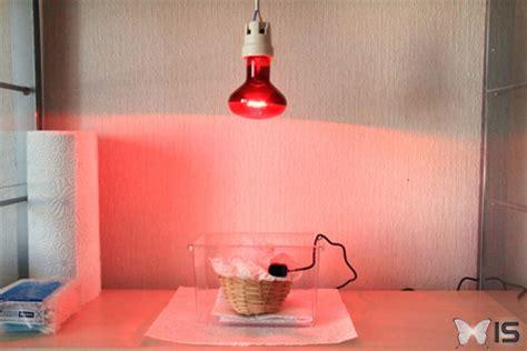 intra science comment s occuper d un oisillon 233 du nid