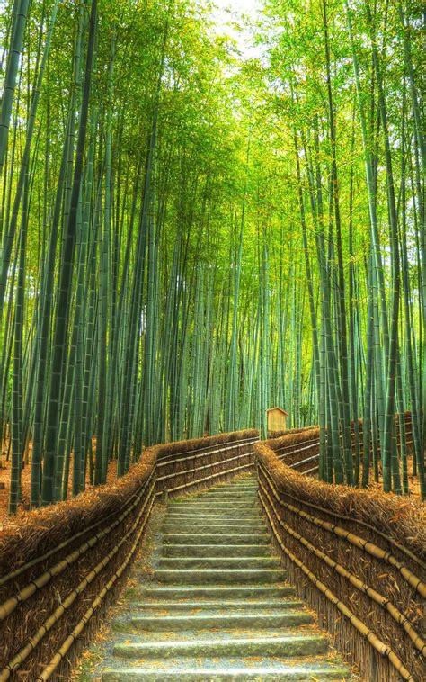 arashiyama bamboo forest kyoto japan travel