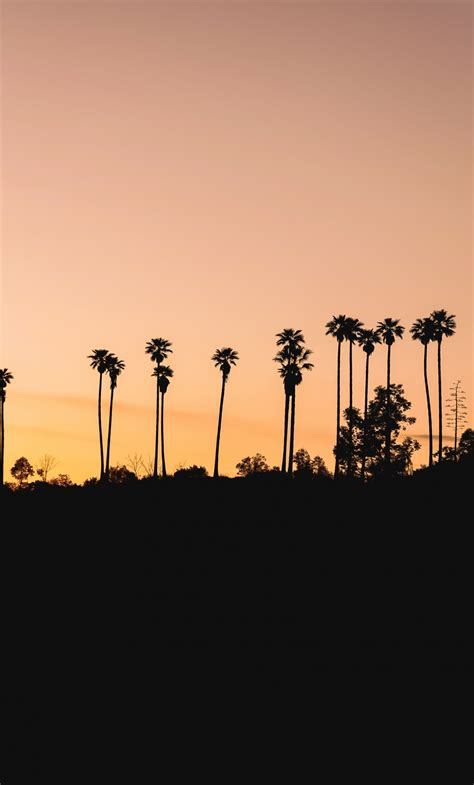 Download Trees palm trees silhouette evening nature