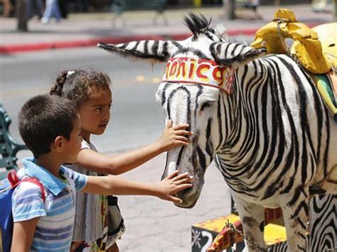 tijuana animal rights lawyers win   zonkeys san