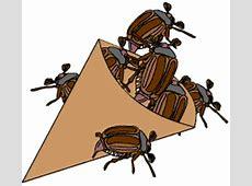 KäferSpezial im kidswebde