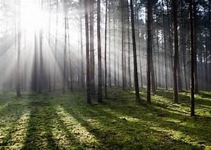 Tyndall effect, visible light rays | Tyndall stuff ...