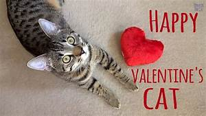 Happy Valentine's cat - YouTube