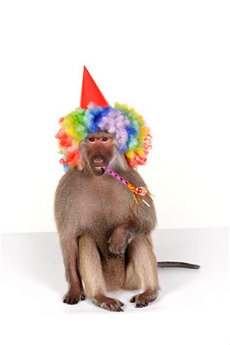 birthday animal stock  kimballstock