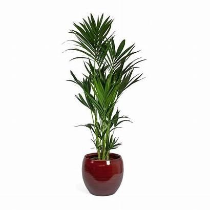 Plant Pot Cresta Deep Indoor Palm Pots