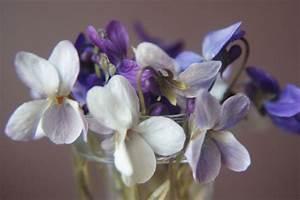 Bouquet De Printemps : fleurs de printemps 1 on va voir si je m 39 y tiens ~ Melissatoandfro.com Idées de Décoration
