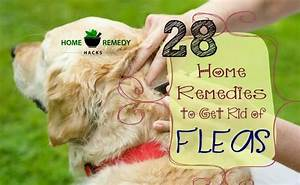 with miraculous benefits to your health 28 home remedies to get rid of fleas