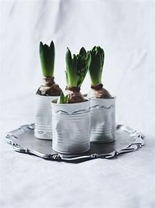 Pflanzkörbe Für Blumenzwiebeln : ber ideen zu schneegl ckchen basteln auf pinterest ~ Lizthompson.info Haus und Dekorationen
