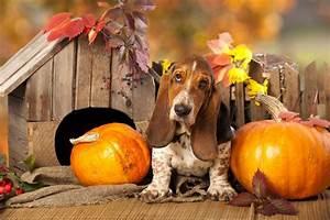 Schneckenkorn Giftig Für Hunde : zucchini k rbis und co k nnen f r hunde giftig sein ~ Lizthompson.info Haus und Dekorationen