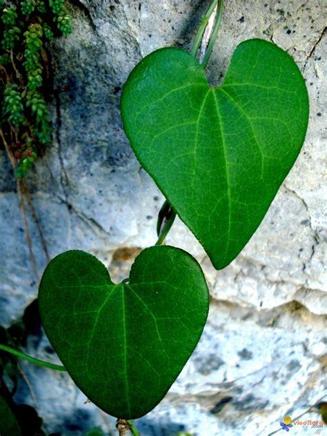 Les Plantes Vertes Du Moment !