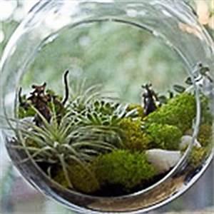 Sukkulenten Im Glas Pflanzen : deko und wohnambiente ~ Eleganceandgraceweddings.com Haus und Dekorationen