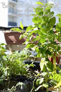 Quand Planter Les Tomates Cerises : plantation tomates cerises good comment planter tomates ~ Farleysfitness.com Idées de Décoration