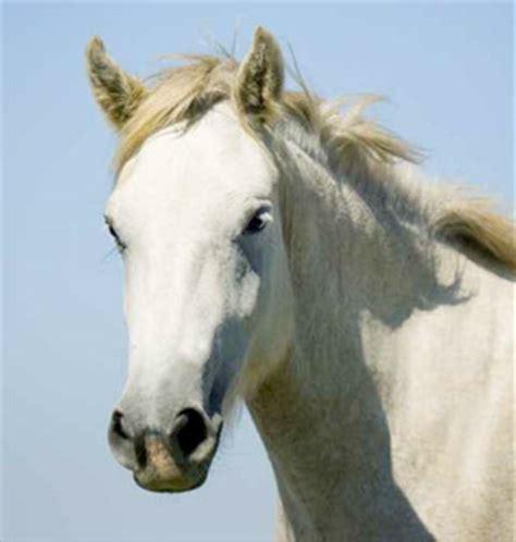 chambres d hotes saintes de la mer elevage chevaux camargue manade en camargue chevaux