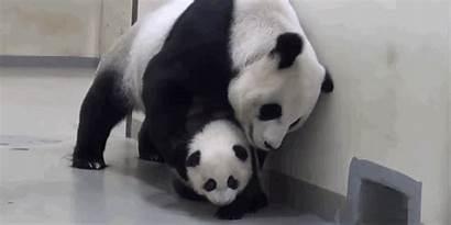 Panda Mom Bed Zoo