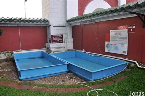 le uv pour tortue aquatique bassin pour tortue aquatique images