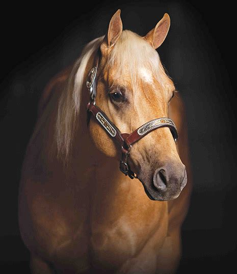 oswood stallion station cd diamond