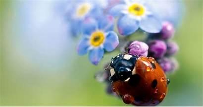 Ladybug Flower Sitting Wallpapers Backgrounds