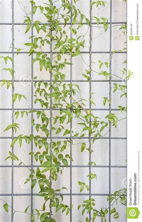 treillis pour plante grimpante treillis plante grimpante