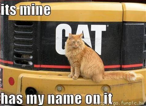 Cute Animals With Captions Barnorama