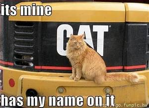 Funny Animal Pictures with Captions » Insomniac Ramblings
