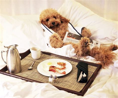 Pet Friendly Hotels Around The Us Instylecom