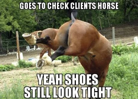 Gay Horse Meme - farrier memes or what all farriers are secretly thinking horse nation