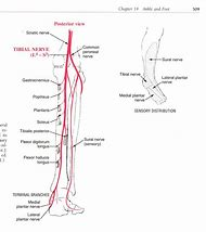 Best Gastrocnemius Muscle - ideas and images on Bing   Find what you ...