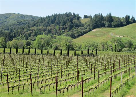 Explore our fumé blanc, sangiovese, and other new release! Ferrari Carano Vineyards and Winery | Wine Life in the SCV