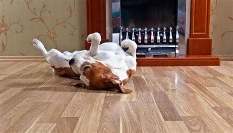 best hardwood floors for dogs the best floors for your pet and your home 7704