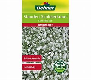 Weiße Stauden Mehrjährig : dehner samen stauden schleierkraut 39 schneeflocke 39 dehner garten center ~ Eleganceandgraceweddings.com Haus und Dekorationen