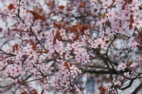 Free Images : branch flower petal food spring produce