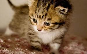 Cute baby kittens wallpapers
